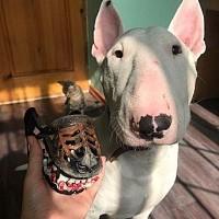 Намордник для собак Грэсовский