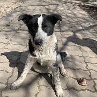 Щенок 3, 5 месяца мальчик Симферополь